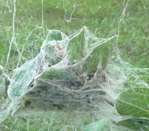 Big Clump Web