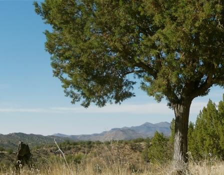 Quiet New Mexico Desert