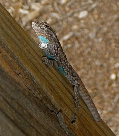 Lizard Friend with Blue Pendant