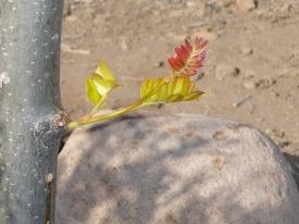 New Leaf Life