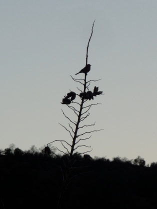 Bird Perched on Top a Cholla