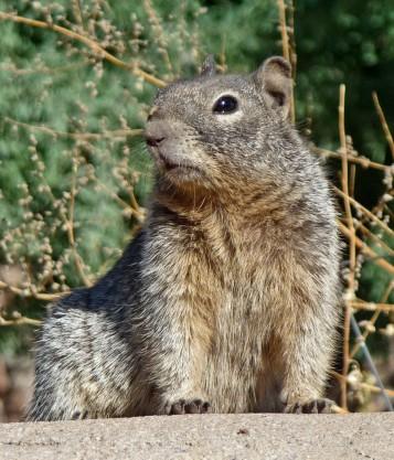 Squirreled