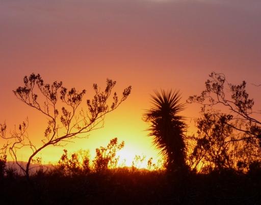 Sunset at Oliver Lee Park, NM