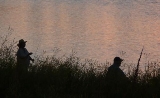 Hidden by the Grass, Still Pond, Waiting
