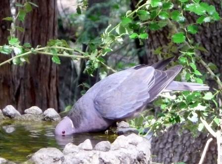 bird in fountain