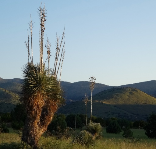 Southern New Mexico Desert