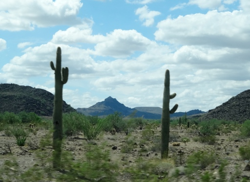 A Distant Hill Sits between Saguaro Cacti